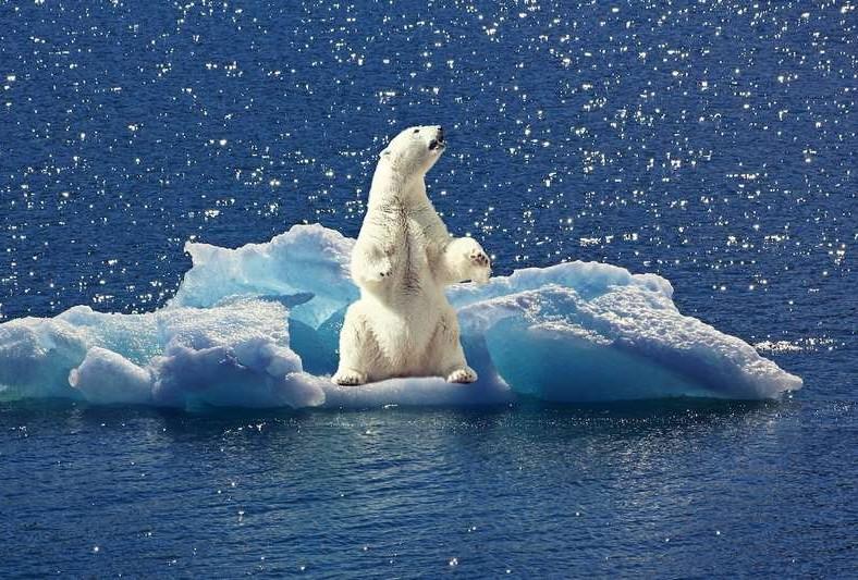 2cec1dac61_132738_rechauffement-climatique-consequence-banquise Le changement climatique.