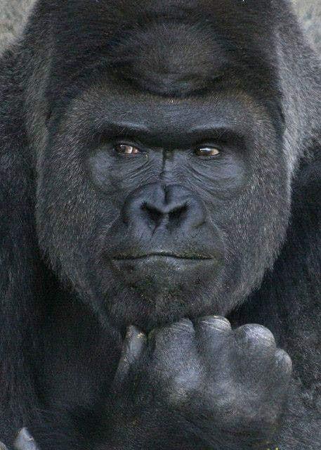 58729781_802021776848915_1662890575415738368_n La 6ème extinction.