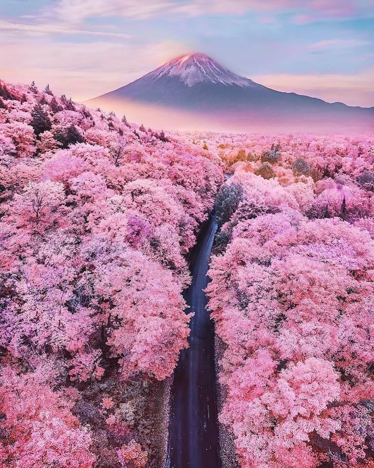 La coutume japonaise du Hanami, contemplation des fleurs et plus particulièrement du Sakura (cerisier), est d'apprécier la beauté de ces arbres splendides, d'en admirer leurs fleurs et leurs couleurs éphémères. Bien sûr il s'agit d'une métaphore utilisée pour symboliser le cycle immuable de la vie, ce grand mouvement qui transforme toute chose. Une vie belle et courte pour cette fleure comme l'est celle de l'homme qui les admire… Le Hanami favorise l'introspection, c'est une réflexion sur notre passage sur terre et sur ce qui nous est essentiel. Cela nous rappelle combien la vie est courte et qu'il faut en profiter. La saison des cerisiers sonne alors l'heure des bilans, et invite chacun d'entre nous à prendre le temps de réfléchir à ses envies et à ses projets. Ce moment tourné vers l'avenir est un beau symbole de renouveau et de bonheur futur, de cette beauté éphémère, mais aussi d'évolution et de réussite. Je vous souhaite donc en ce moment d'introspection, de retour à soi, de vous abandonner pleinement à ce regard de l'éphémère, de profiter de la vie et de toute la beauté qu'elle nous offre ! Belle soirée et excellent week-end ! :) Christophe