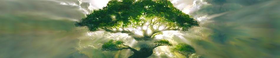 BANDO-ARBRESSSSS L'énergie des arbres.