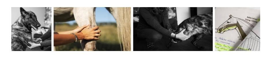 Shiatsu animalier, Anaïs Royer, soins énergétiques, soins énergétiques Paris, blocages énergétiques, blocages émotionnels, abondance, alignement, reiki, chakra, chamanisme, clair ressenti, bioénergie, Christophe MEXIS